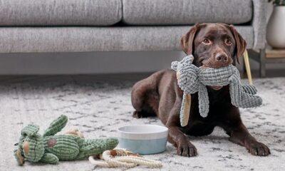 Cómo preparar la casa para la llegada de un perro adoptado